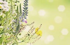 Fond floral de vacances Photos libres de droits
