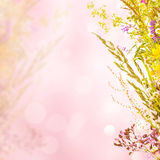 Fond floral de vacances Photos stock