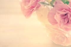 Fond floral de vintage avec les fleurs roses douces photographie stock