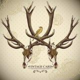 Fond floral de vintage avec un crâne de cerfs communs Photo libre de droits