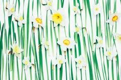 Fond floral des fleurs et des feuilles de vert Images libres de droits