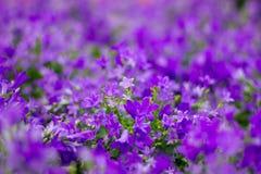 Fond floral des fleurs pourpres dans le bokeh Images stock