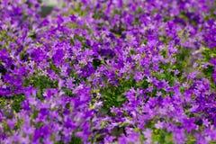 Fond floral des fleurs pourpres dans le bokeh léger Photographie stock
