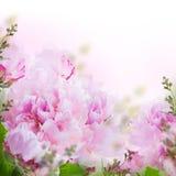 Fond floral des roses Images libres de droits