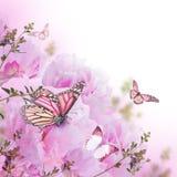 Fond floral des roses Images stock