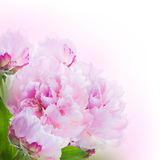 Fond floral des roses et des lis Image libre de droits