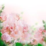 Fond floral des roses et des lis Photos libres de droits