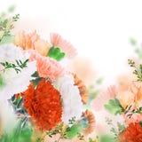 Fond floral des roses et des lis Images libres de droits