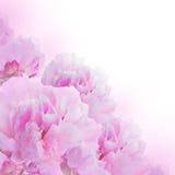 Fond floral des roses et des lis Images stock