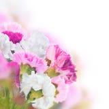 Fond floral des roses et des lis Photo libre de droits