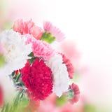 Fond floral des roses et des lis Photographie stock libre de droits