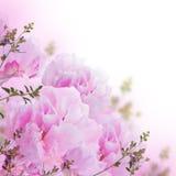 Fond floral des roses et des lis Photographie stock