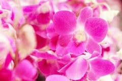 Fond floral doux, fleur pourpre d'orchidée avec le foyer mou Photo stock