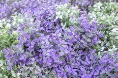 Fond floral, feuilles des pistaches, vert et lilas Photo stock