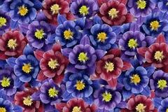 Fond floral fleurs Bleu-pourpre-violettes collage floral Composition de fleur Images libres de droits