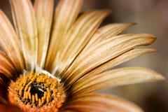 Fond floral grunge images libres de droits
