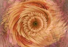 Fond floral lumineux jaune-rouge-orange abstrait Le Gerbera fleurit des pétales en gros plan Carte de voeux collage floral Photographie stock libre de droits