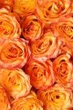 Fond floral orange Photographie stock libre de droits