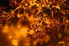 Fond floral Papier numérique teinté Papier peint de cuivre de style de bokeh photo stock