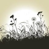 Fond floral, pissenlit illustration de vecteur