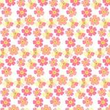 Fond floral romantique Fleur Marguerites japonaises Image libre de droits