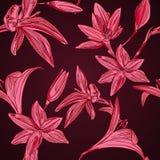 Fond floral sans couture avec les fleurs tirées par la main. Vecteur EPS10 Photographie stock libre de droits