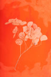 Fond floral sec orange Photographie stock libre de droits