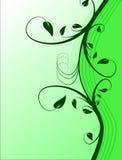 Fond floral vert Photo stock