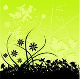 Fond floral vert Photographie stock