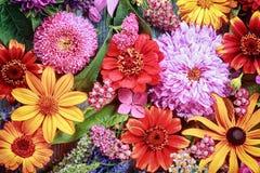 Fond floral vibrant de fête photos libres de droits