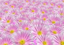 Fond floral violet Photographie stock