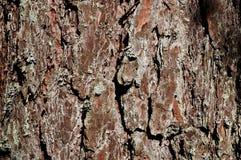 Fond. Forêt d'été. Co Image stock