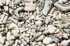 Fond fossile de corral Image stock