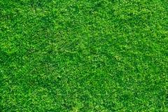 Fond frais d'herbe de pelouse Photos libres de droits