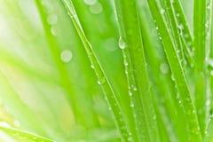 Fond frais d'herbe verte Images libres de droits