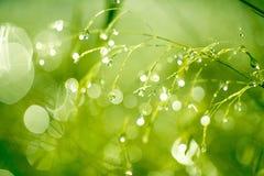 Fond frais d'herbe verte Photos stock