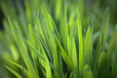 Fond frais d'herbe verte Photographie stock libre de droits