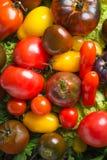 Fond frais de colorfull de tomates d'héritage, produit organique image stock