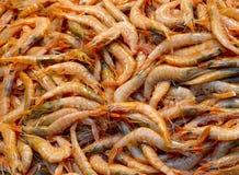 Fond frais de crevettes roses Photos stock