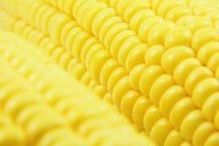 Fond frais de maïs Photo libre de droits