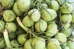Fond frais de noix de coco Photographie stock libre de droits