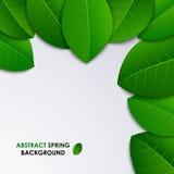 Fond frais de ressort abstrait avec les feuilles vertes Images libres de droits