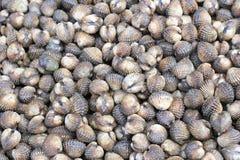 Fond frais de texture de coques de sang de mollusques et crustacés Images stock