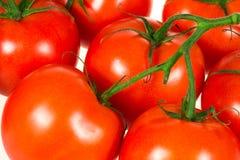 Fond frais de tomates Photographie stock libre de droits