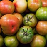 Fond frais de tomates Diverses tomates mûres organiques en mars Image libre de droits