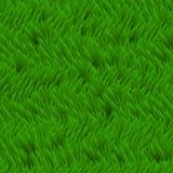 Fond frais de vecteur d'herbe Champ d'herbe verte, texture de fines herbes Image stock