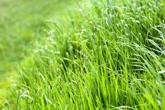 Fond frais vert d'herbe images stock