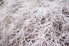 Fond gelé de branches photographie stock