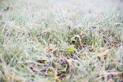Fond givré d'herbe exprimant le nouveau début Image stock