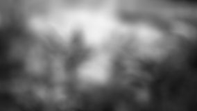 Fond gris-clair de tache floue Photographie stock